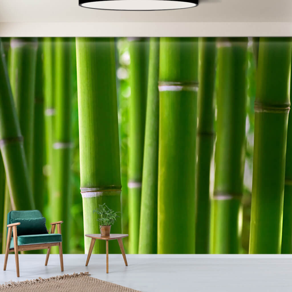 Green bamboo reeds trunks scalable custom wall mural