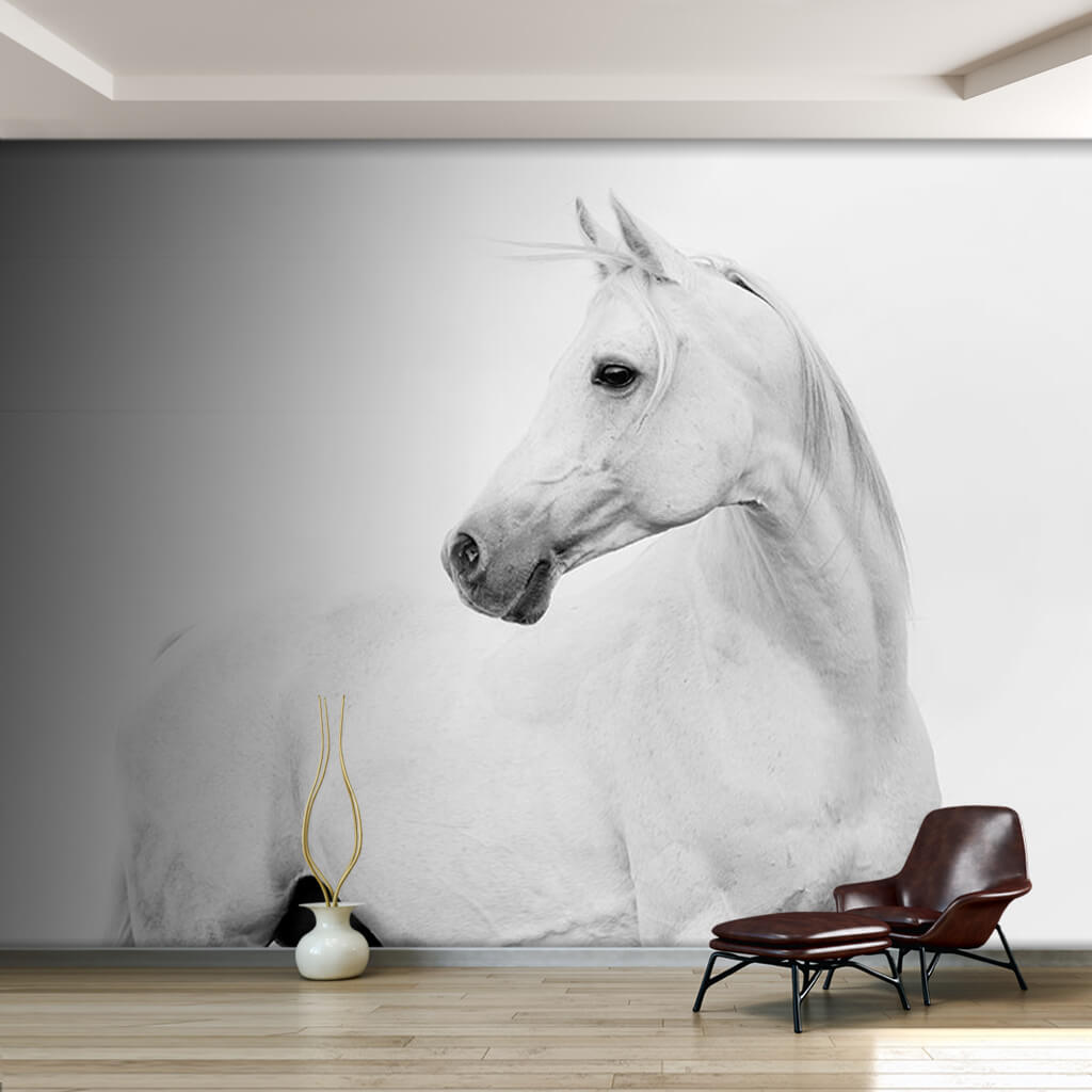 Mare backward-facing Arabian horse stallion wall mural