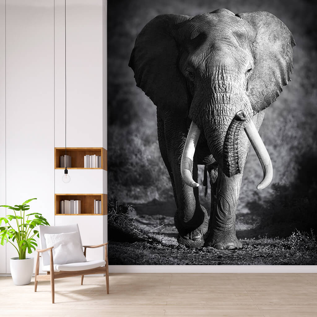 Bull elephant wild animals of Africa black white wall mural