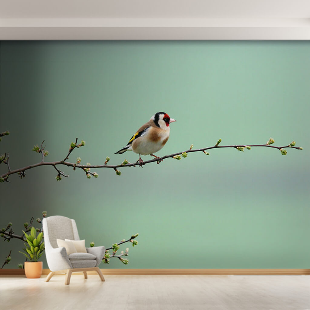 Red headed sparrow goldfinch on tree branch wall mural