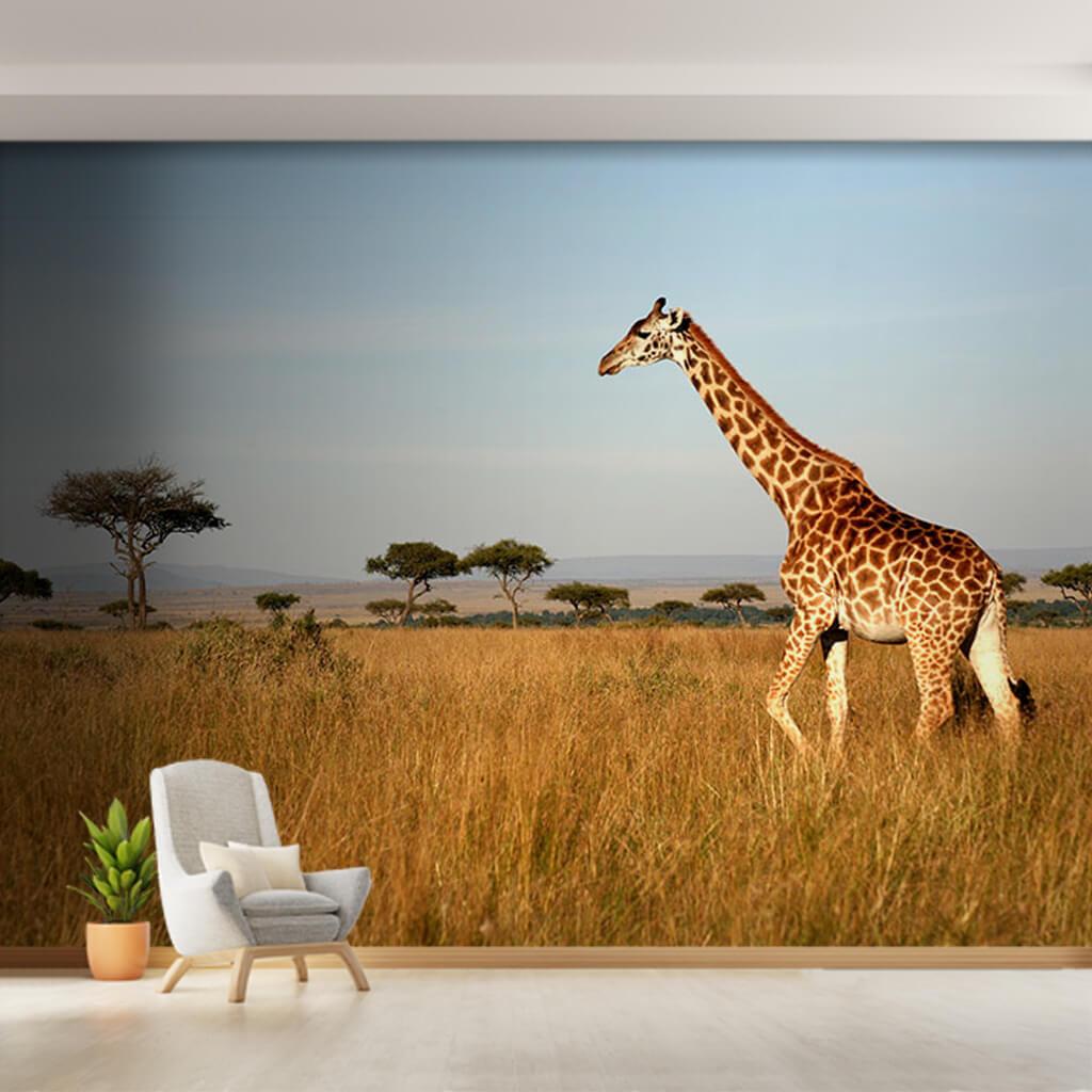 Savanada yürüyen zürafa Kenya Afrika hayvanlar duvar kağıdı