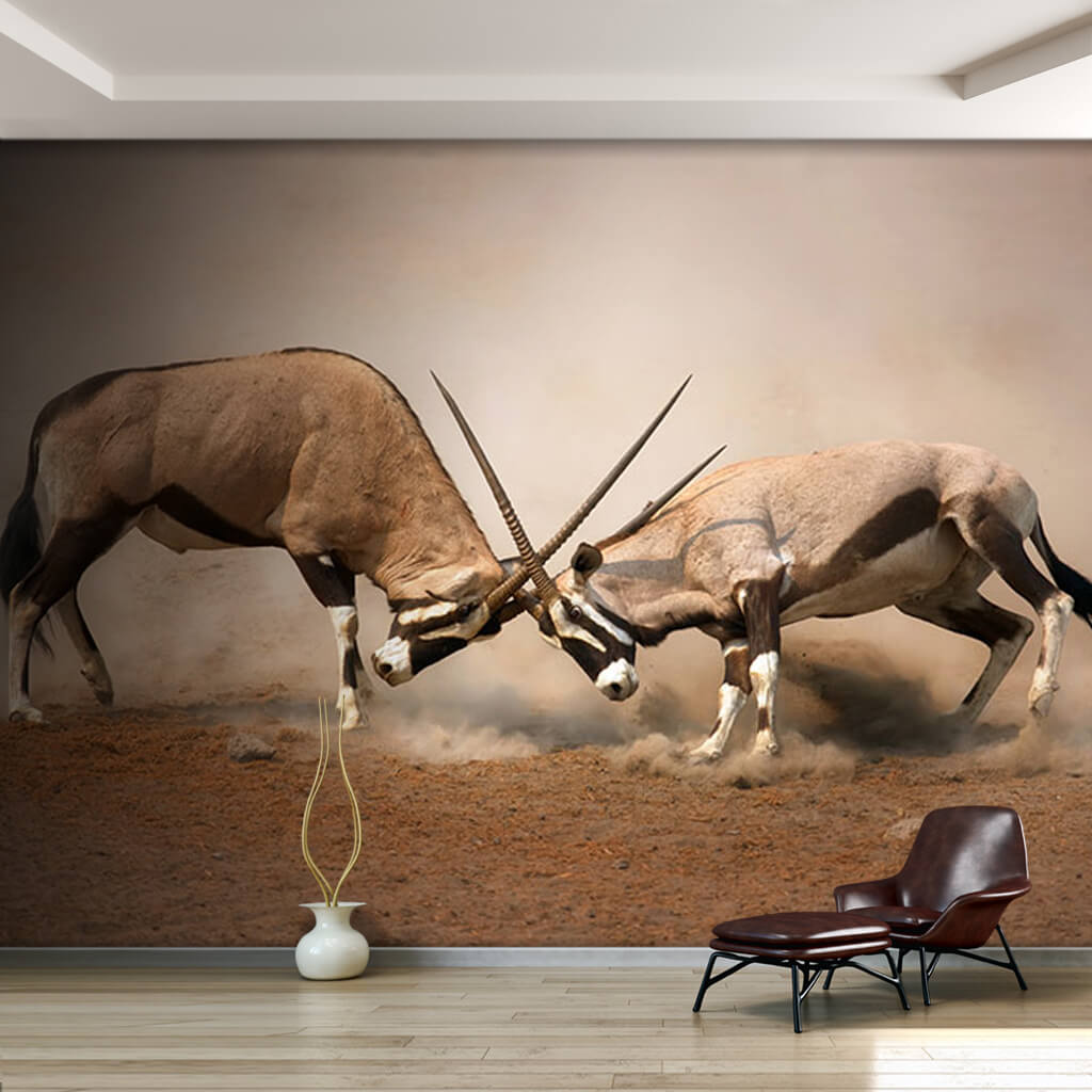 Fighting 2 Oryxies the African antelope Namibia wall mural