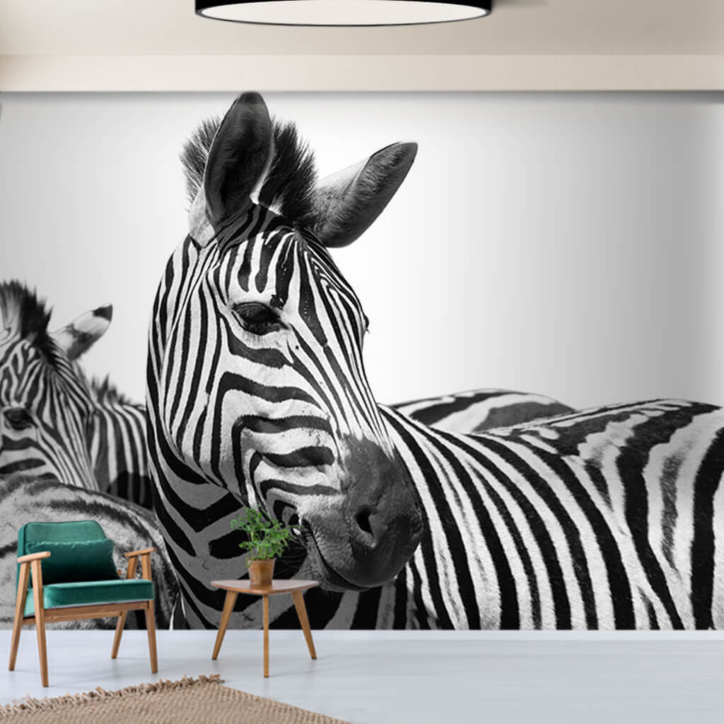 Black and white zebras wild animals of Africa wall mural