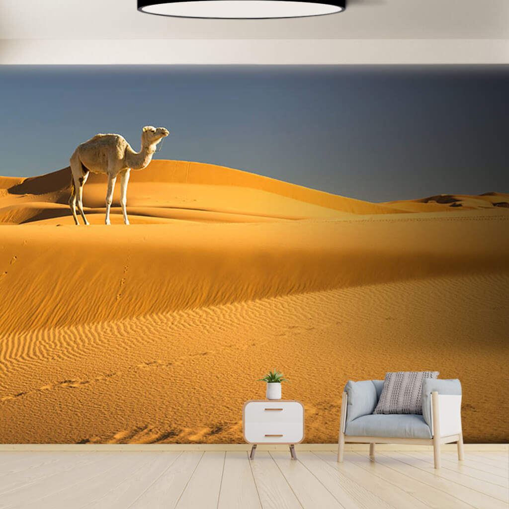 Lonely white camel on yellow desert sands animals wall mural