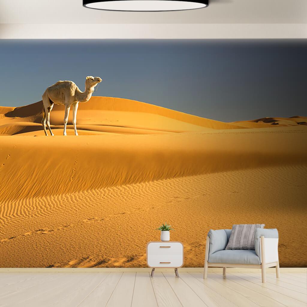 Sarı çöl kumları üzerinde tek beyaz deve duvar kağıdı