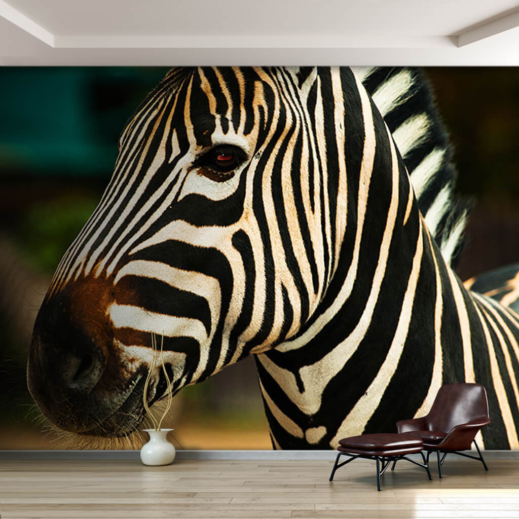 Adult zebra in African savanna wall mural