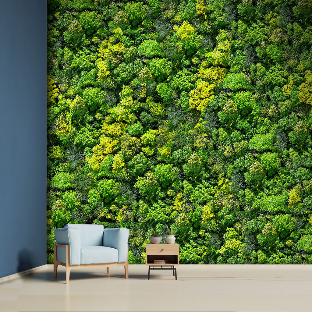 Bird eye view of forest green and trees 3D custom wall mural