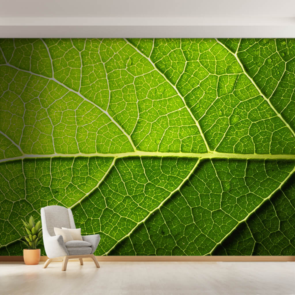 Cross section of green leaf veins and water drops wall mural