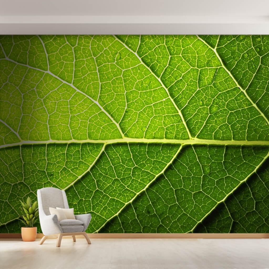Yeşil yaprak damarları ve su damlaları kesiti duvar kağıdı