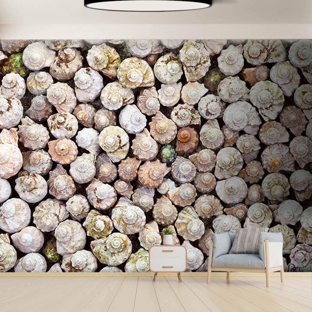 Deniz salyangozları kabukları dekor mimari duvar kağıdı