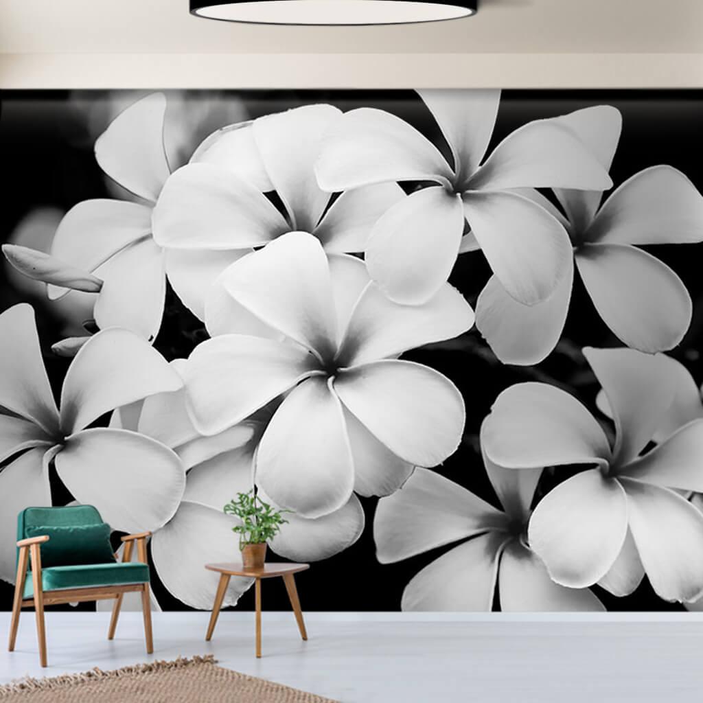Black and white plumeria flowers frangipani wall mural