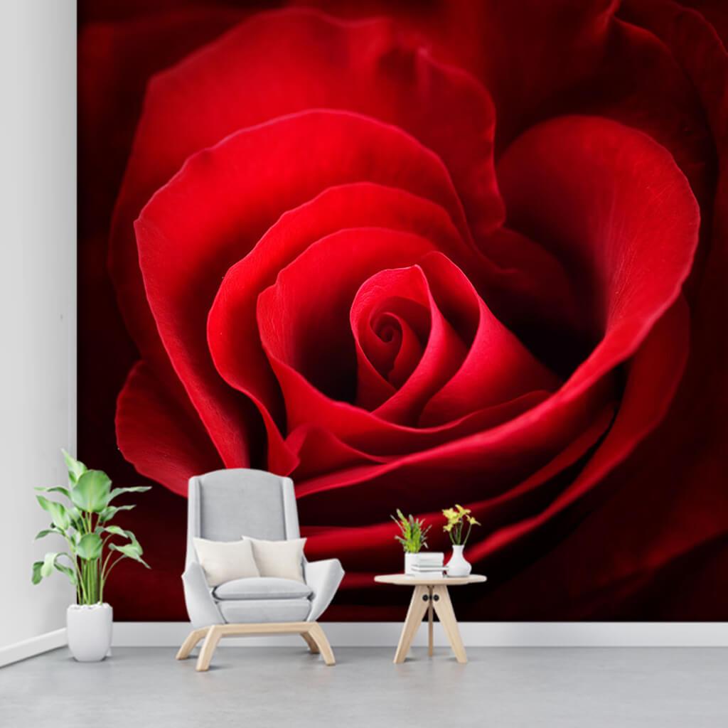 Deep Red leaved rosebud Custom scalable wall mural