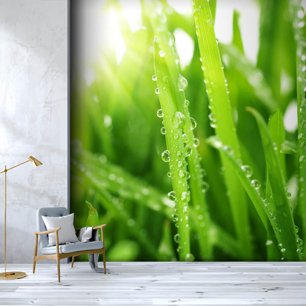 Dew drops on green grass leaves scalable custom wall mural