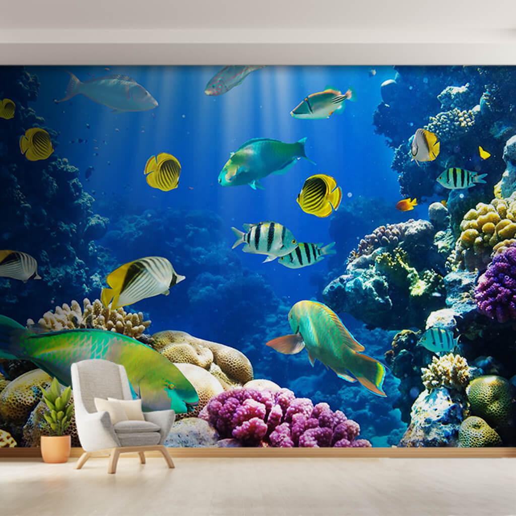 Deniz mercan resifi papağan ve melek balıkları duvar kağıdı