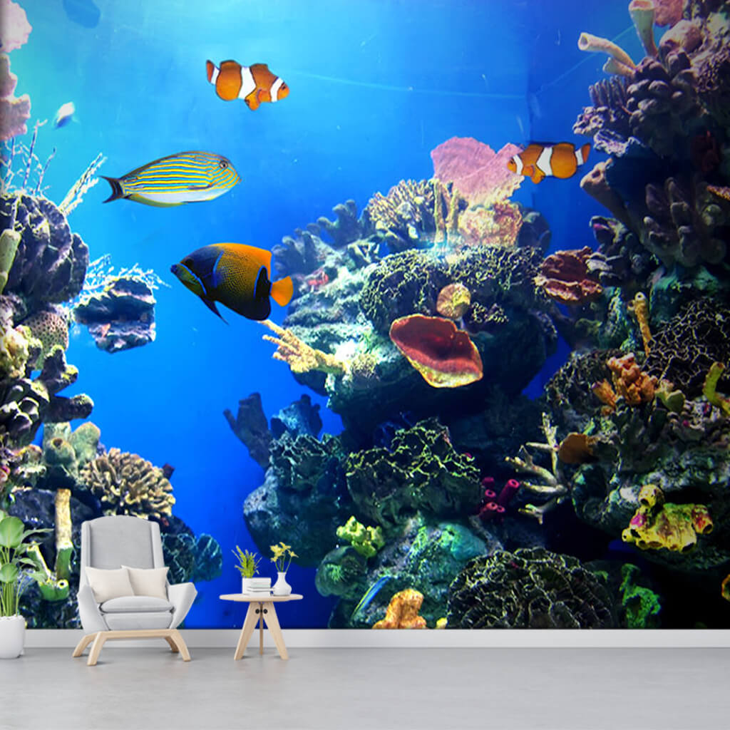 Custom wall mural of yellow white clown fishes in coral reef