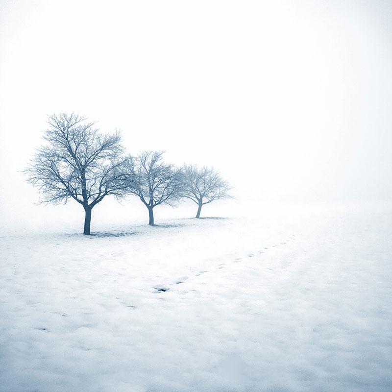 Kis Mevsimi Beyaz Kar Ve Sis Icinde 3 Agac Doga Duvar Kagidi