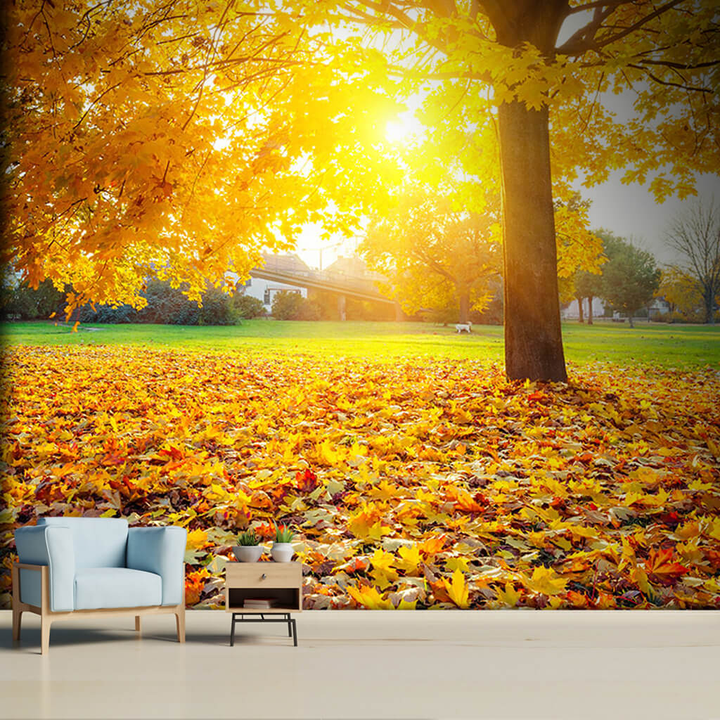 Backyard with leaves of sycamore tree in autumn wall mural
