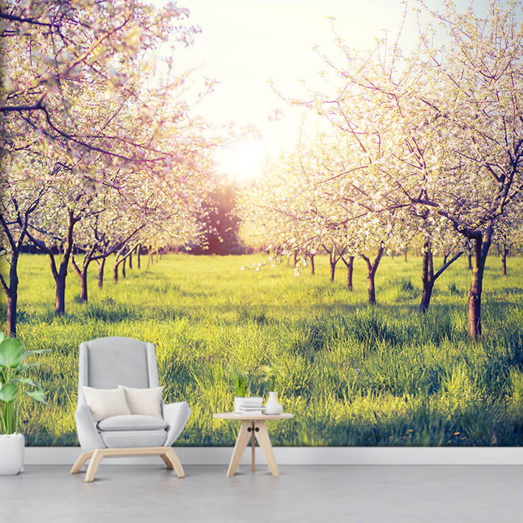 Apple trees orchard in spring custom nature wall mural