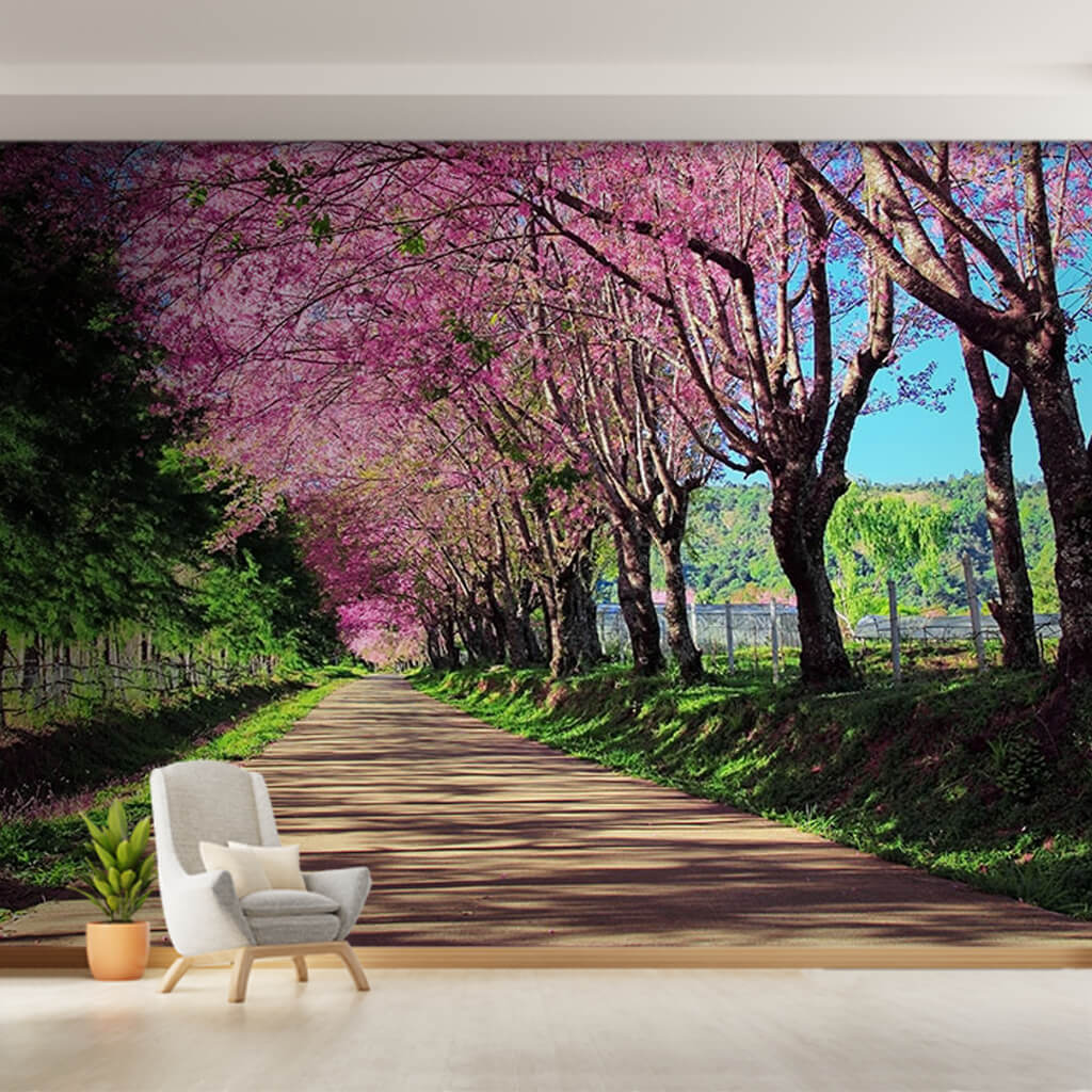 Pink Flowering Cherry Tree Road Chiang Mai Thailand Wall Mural