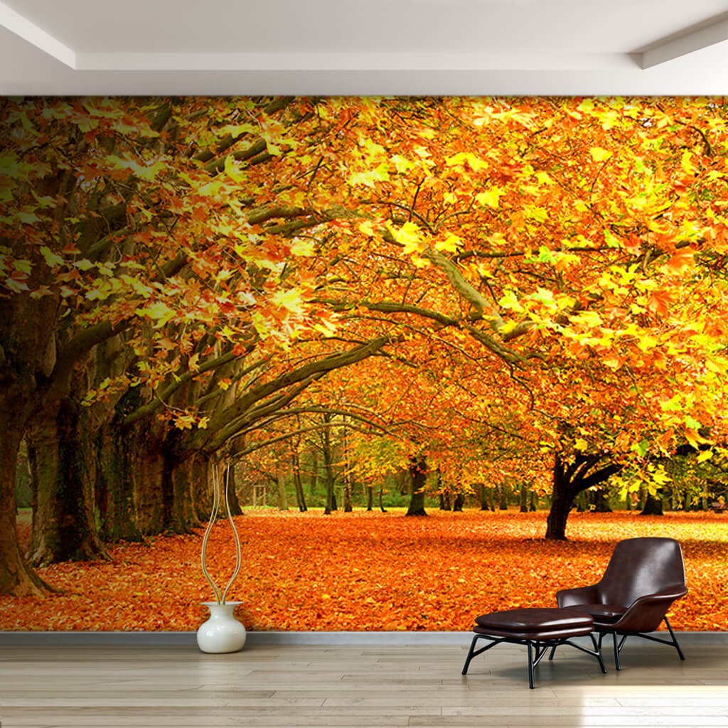 Autumn yellow leafy sycamore trees scenery custom wall mural