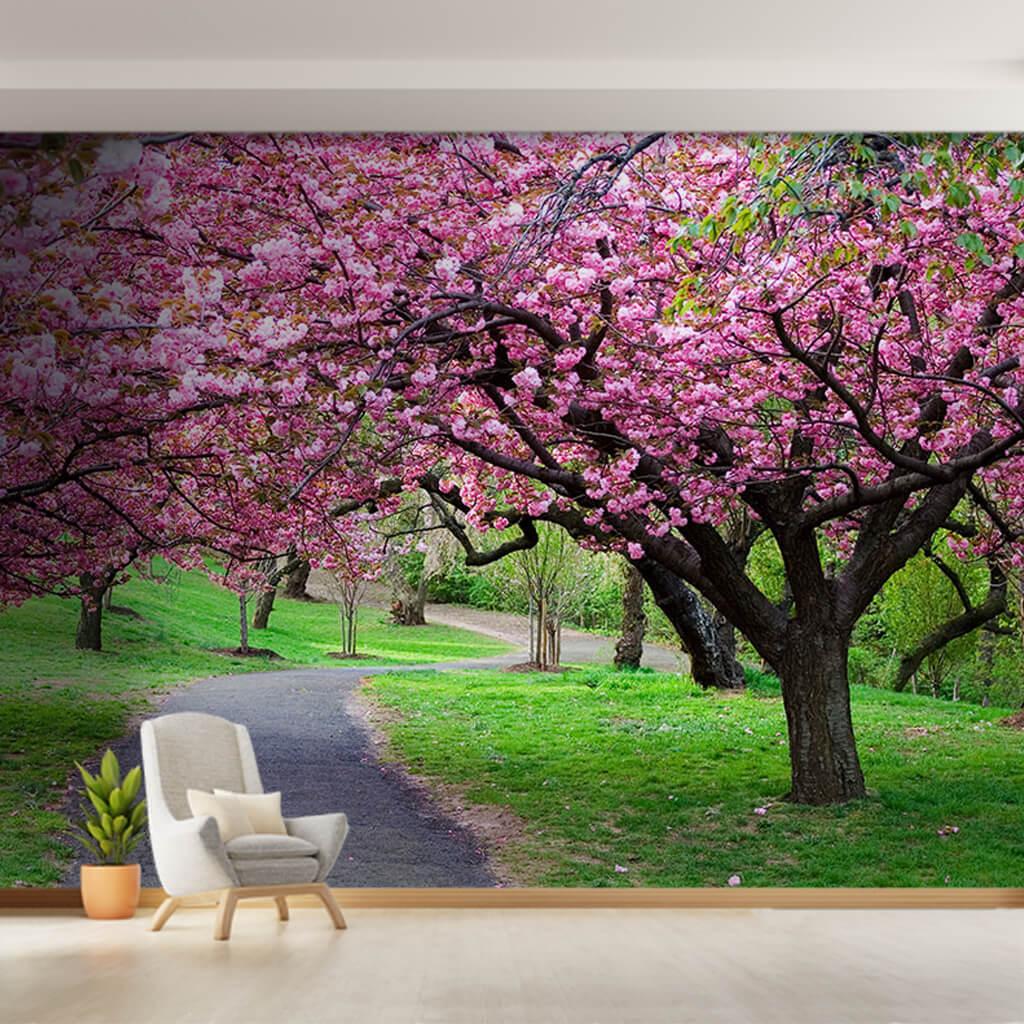 Baharda sakura kiraz çiçeği ağaçlı yol doğa duvar kağıdı