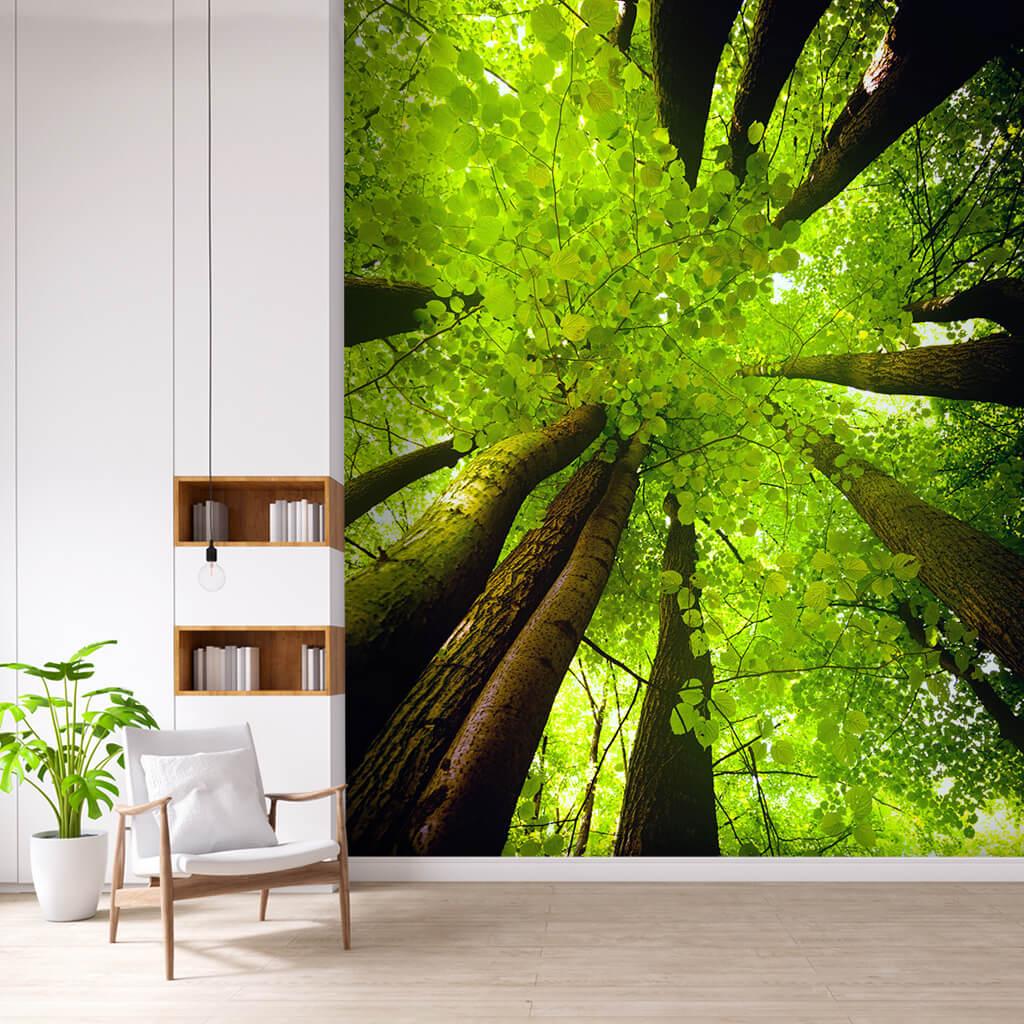 Alttan bakış yeşil kayın ağaçları kanopi tavan duvar kağıdı