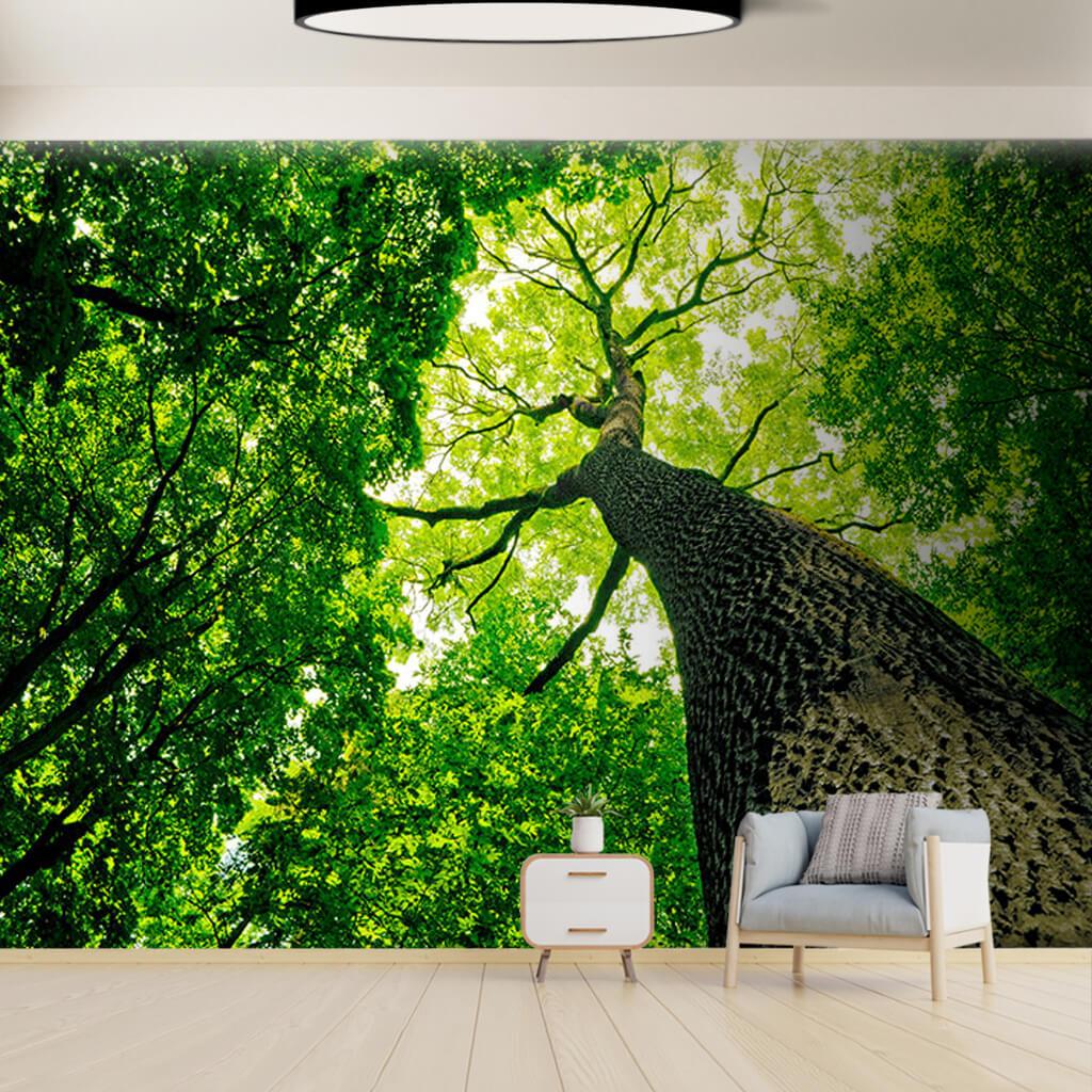 Alttan bakış orman içinde yeşil ağaç tavan duvar kağıdı