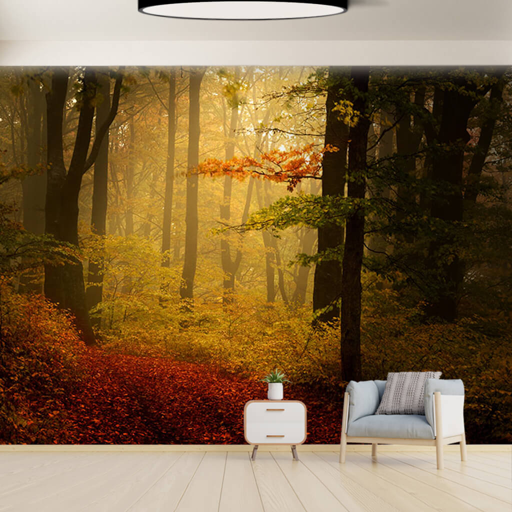 Autumn colors in foggy forest nature landscape wall mural