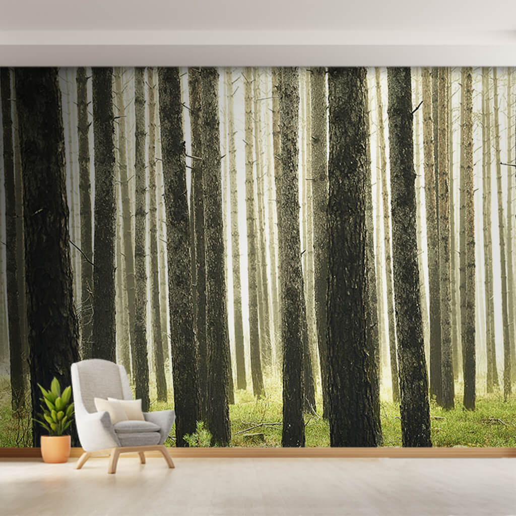 Summer season birch trees grove forest landscape wall mural