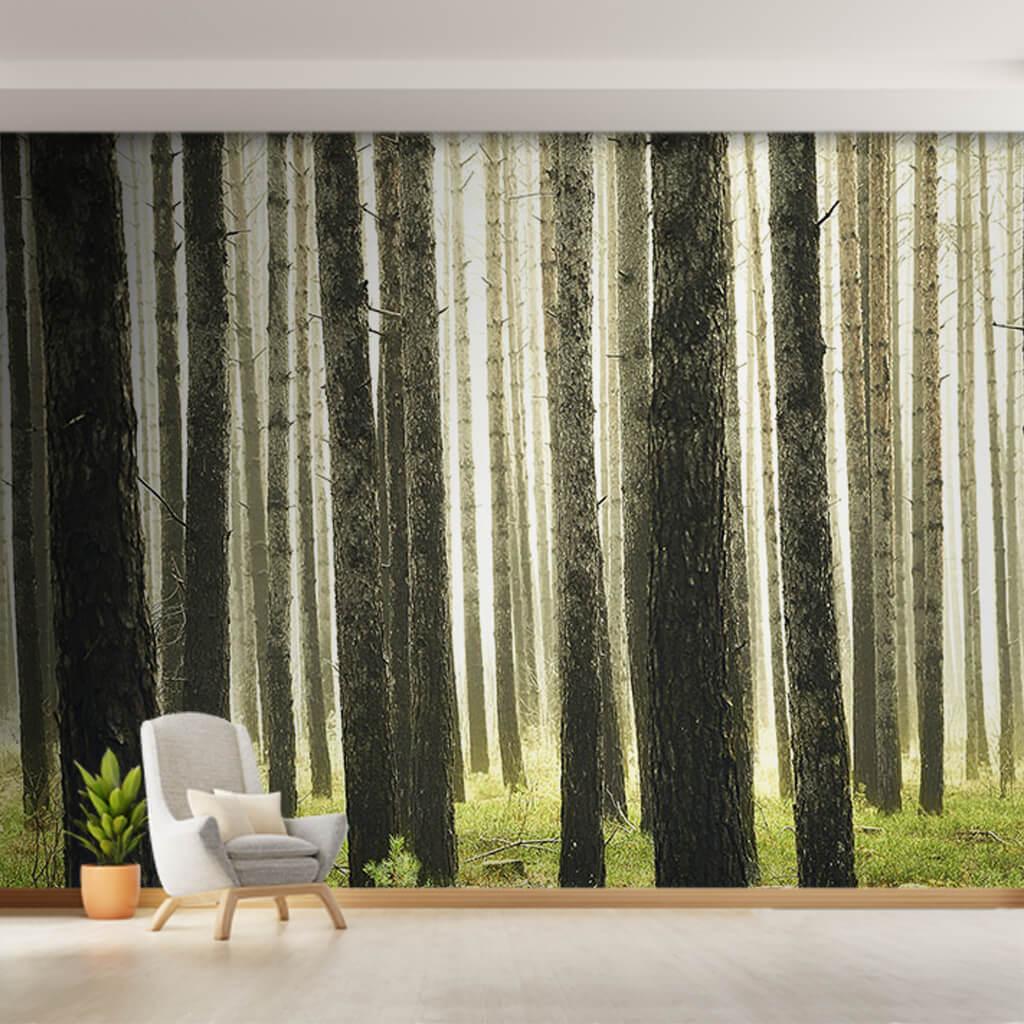 Yaz mevsimi Huş ağaçları korusu orman manzarası duvar kağıdı