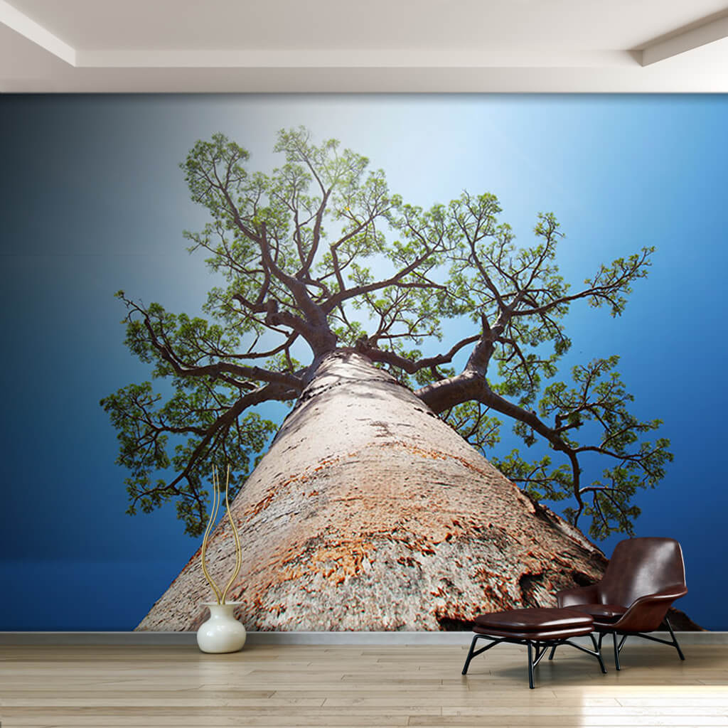A wide-bodied baobab tree from below ceiling wall mural